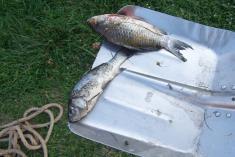 Záchrana ryb